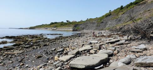 East Cliff fossil beach