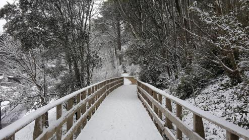 Snow Langmoor Gardens boardwalk